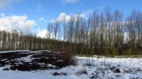 Snö täckte brances, och trä loggar in skogen under vinter arkivfoton