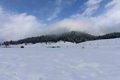Snö täckte fältet och avlägsna träd i Gulmarg, Kashmir Arkivbilder