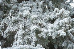 Snö täckte filialen för vintermeddelande royaltyfri fotografi