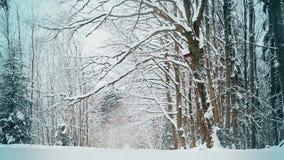 Snö-täckte filialer av ekar i vinter i December lager videofilmer
