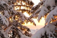 Snö-täckte filialer i strålarna av resningsolen royaltyfri fotografi