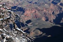 Snö täckte filialer som förbiser Grand Canyon arkivbild