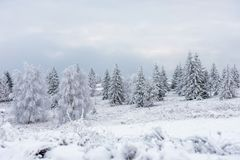 Snö täckte fryste träd i bergen arkivfoton