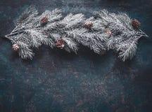 Snö täckte granfilialer med kottar på mörkt - blå bakgrund, bästa sikt med kopieringsutrymme för din design royaltyfri foto
