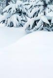 Snö-täckte granträd och snödrivor Fotografering för Bildbyråer
