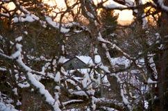Snö täckte huset som igenom sågs träden på solnedgången Royaltyfri Fotografi