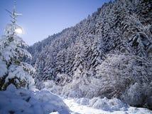 Snö täckte skogen går fotografering för bildbyråer