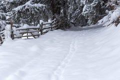 Snö täckte slingan i skogen med filialer längs banan in Arkivbilder