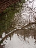 Snö täckte slut för trädskäll upp utvändig skogvinter Arkivfoton