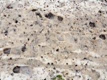 snö täckte smutsig textur för yttersida för gångbana för golv för skogbana fotografering för bildbyråer
