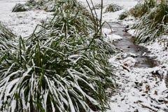 Snö-täckte tofsar av gräs och den lilla strömmen i is i stad parkerar i dimmig morgon royaltyfri bild