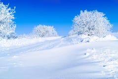 Snö-täckte träd fotografering för bildbyråer
