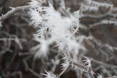 Snö-täckte träd i öknen Arkivbilder