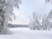 Snö-täckte träd i den frostiga dagen i djupfryst mist på kusten av skogsjön som täckas med is Arkivfoton