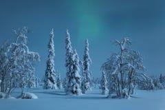 Snö-täckte träd i månsken med knappt synliga nordliga ljus arkivfoto