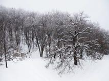 Snö-täckte träd i skogen på en molnig vårdag royaltyfria bilder