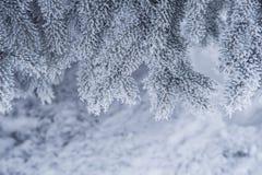 Snö-täckte träd i vinter parkerar Arkivfoto