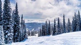 Snö täckte träd och den djupa snöpacken på en skida som är inkörd det höga alpint nära byn av solen, når en höjdpunkt royaltyfri bild