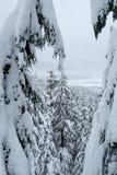 Snö täckte träd på den svarta bergsnöskon skuggar Arkivfoton