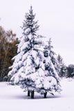 snö-täckte träd parkerar Royaltyfria Foton