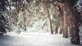 Snö-täckte träd planterar skogen i vinterfiltret, effekt stock video