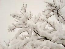 Snö täckte trädfilialen på mulen dag arkivbild
