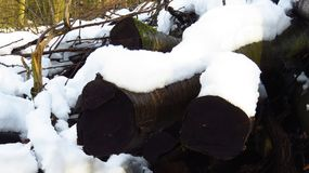 Snö täckte träjournaler under vinter royaltyfri foto