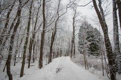 Snö täckte vinterträd på en bana Fotografering för Bildbyråer