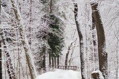 Snö täckte vinterträd på en bana Royaltyfria Foton