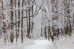 Snö täckte vinterträd på en bana Royaltyfri Bild