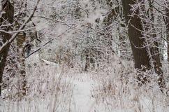 Snö täckte vinterträd på en bana Arkivbild