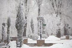 Snö-täckte vinterträd på en stadsboulevard Arkivfoto