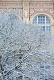 Snö täckte vinterträdet med den utsmyckade herrgårdväggen Royaltyfri Fotografi