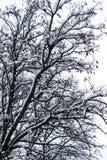 Snö täckte vinterträdfilialer arkivbild