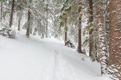 Snö vinter, landskap som är snöig Arkivbild