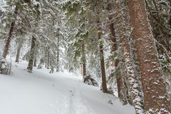 Snö vinter, landskap som är snöig Royaltyfria Bilder