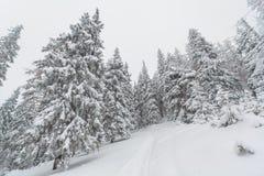 Snö vinter, landskap som är snöig Arkivfoton