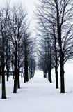 Snöa öknen med träd, ensamhet och sorgsenhet Royaltyfri Foto