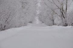 Snöa, övervintra, vit, ljus, naturen som är fluffig, väg Arkivfoto