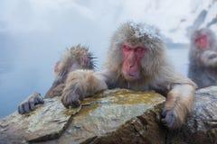 Snöa apan i varmvatten på Jigokudani Onsen i Naga arkivbilder