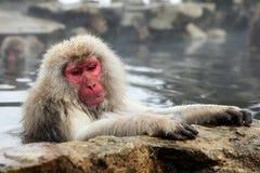 Snöa apan, macaquebadning i den varma våren, den Nagano prefekturen, Japan Arkivbilder