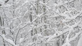 Snöa att falla i skog på bakgrund av avlövat arkivfilmer
