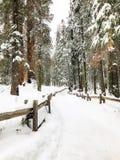 Snöa bana i skogen royaltyfri bild