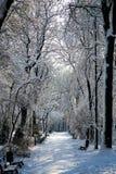 Snöa den dolda gränden i parkera med bänkar Royaltyfri Fotografi