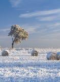 Snöa den dolda hayfielden och sörja trädet Fotografering för Bildbyråer