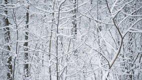 Snöa den dolda skogen eller parkera i vinter arkivfilmer