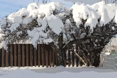 Snöa det dolda trädet - abstrakt konst - illastrationen Arkivbild