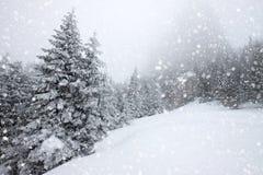 snöa dolda granträd i tungt snöfall - julbakgrund arkivbilder