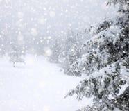 snöa dolda granträd i tungt snöfall - julbakgrund fotografering för bildbyråer