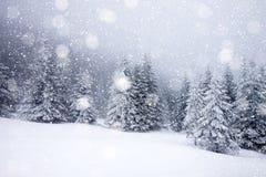 snöa dolda granträd i tungt snöfall - julbakgrund arkivfoto